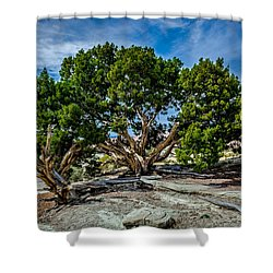 Limber Pine Shower Curtain