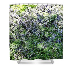 Lincoln Park In Bloom Shower Curtain