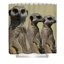 Line Dancing Meerkats Shower Curtain