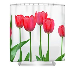Shower Curtain featuring the photograph Line Of Tulips by Steve Augustin