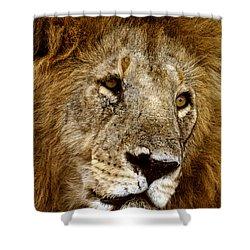 Lion 01 Shower Curtain by Wally Hampton