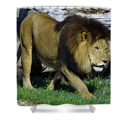 Lion 1 Shower Curtain