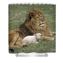Lion And Lamb Shower Curtain by Wildlife Fine Art