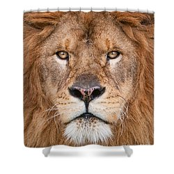 Lion Close Up Shower Curtain by Jerry Fornarotto