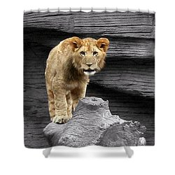 Shower Curtain featuring the photograph Lion Cub by Cathy Harper