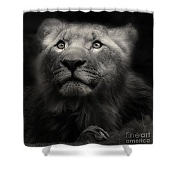Lion In The Dark Shower Curtain