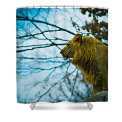 Lion King Shower Curtain by Sara Frank