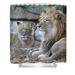 Lion Love Shower Curtain by Amanda Eberly-Kudamik