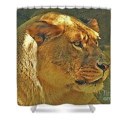Lioness 2012 Shower Curtain