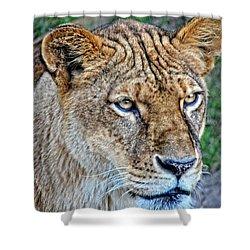 Lioness Deep In Thought Hdr Shower Curtain