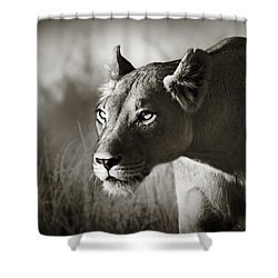 Lioness Stalking Shower Curtain by Johan Swanepoel