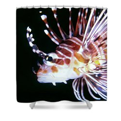 Lionfish 3 Shower Curtain by Dawn Eshelman