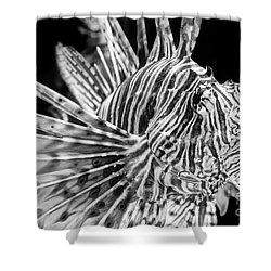 Lionfish Shower Curtain by Jamie Pham