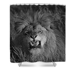 Lions Courage Shower Curtain by Wildlife Fine Art