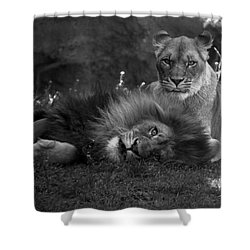 Lions Me And My Guy Shower Curtain by Thomas Woolworth