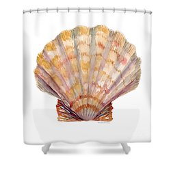 Lion's Paw Shell Shower Curtain