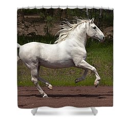 Lipizzan At Liberty Shower Curtain by Wes and Dotty Weber