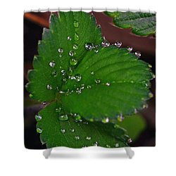 Liquid Pearls On Strawberry Leaves Shower Curtain by Lisa Phillips