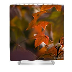 Liquidambar Autumn Shower Curtain by Anne Gilbert
