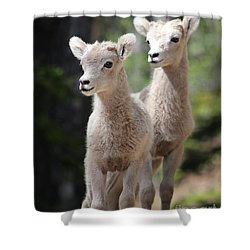 Little Bighorns Shower Curtain