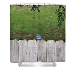 Shower Curtain featuring the photograph Little Bird by Beth Vincent