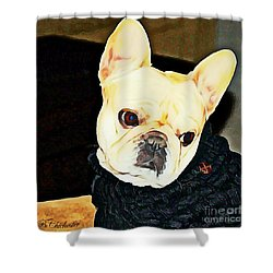 Little Black Sweater Shower Curtain by Barbara Chichester