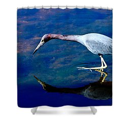 Little Blue Heron Fishing Shower Curtain