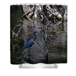 Little Blue Heron Shower Curtain by Skip Willits
