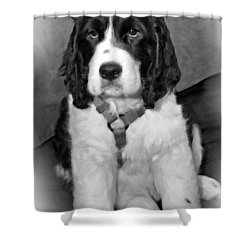 Little Boy Blue Oil Bw Shower Curtain by Steve Harrington