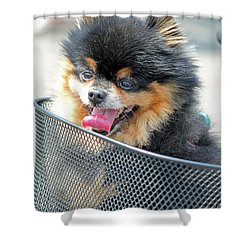 Little Companion Shower Curtain