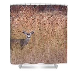 Little Deer Shower Curtain by Ruth Jolly