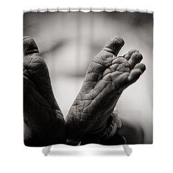 Little Feet Shower Curtain by Adam Romanowicz