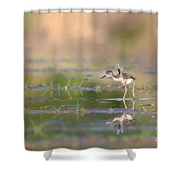 Little Flaps Shower Curtain by Ruth Jolly