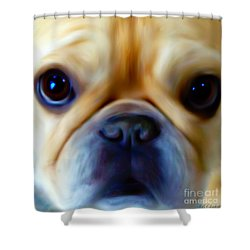 Little Frenchie Face Shower Curtain by Barbara Chichester