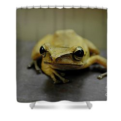 Little Frog Shower Curtain by Michelle Meenawong