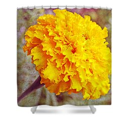 Shower Curtain featuring the photograph Little Golden  Marigold by Kay Novy