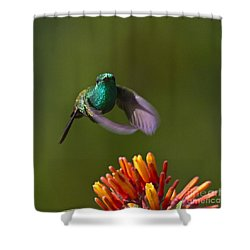 Little Hedgehopper Shower Curtain by Heiko Koehrer-Wagner