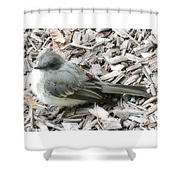 Little Junco Shower Curtain by Chrissey Dittus