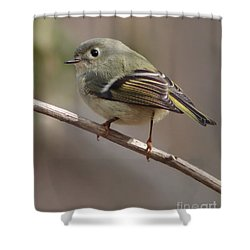 Shower Curtain featuring the photograph Little Kinglet by Anita Oakley