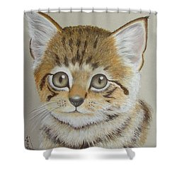 Little Kitty Shower Curtain by Janet Garcia