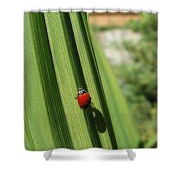 Ladybird Shower Curtain by Cheryl Hoyle