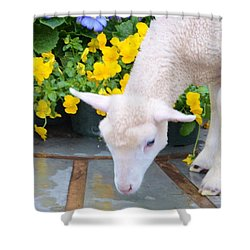 Little Lamb Shower Curtain by Kathleen Struckle