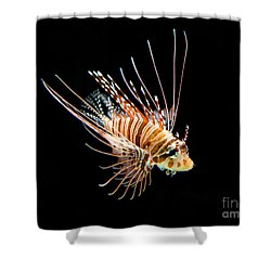 Little Lionfish Shower Curtain by Jamie Pham