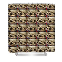 Shower Curtain featuring the photograph Little Miss Blue Eyes 35 by Andee Design