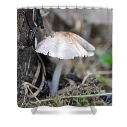 Little Mushroom Shower Curtain by Bill Cannon