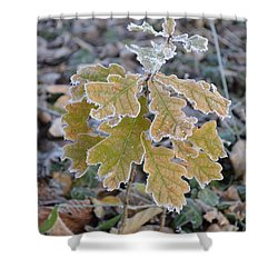 Shower Curtain featuring the photograph Little Oak by Felicia Tica