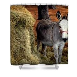 Little Pedro Shower Curtain by Karen Wiles