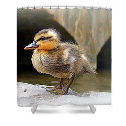 Shower Curtain featuring the photograph Little Quack by Morag Bates