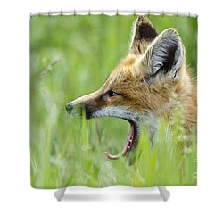 Little Red Sleepy Head Shower Curtain by Dee Cresswell