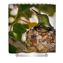 Little Reparing Shower Curtain by Robert Bales
